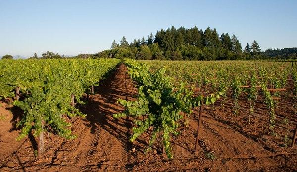 ss-vineyards